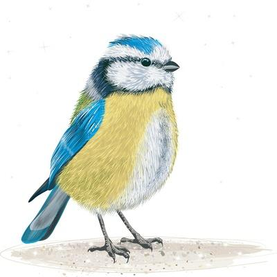 https://imgc.artprintimages.com/img/print/blue-tit-on-the-ground_u-l-q1bxwuo0.jpg?p=0