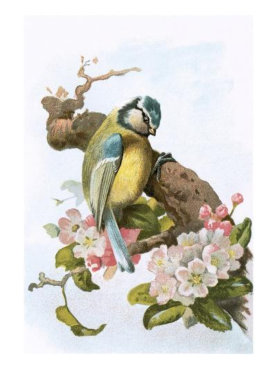 Blue Tit-English-Giclee Print