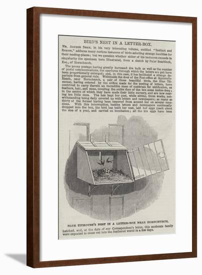 Blue Titmouse's Nest in a Letter-Box Near Hornchurch--Framed Giclee Print