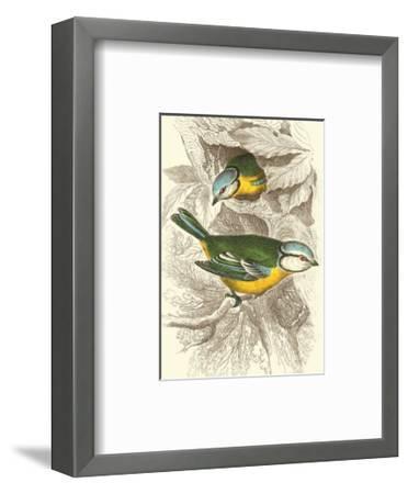 Blue Titmouse-Sir William Jardine-Framed Art Print
