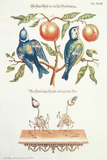 Blue Tits from Angenehmer Und Nutzlicher-J. D. Meyer-Giclee Print