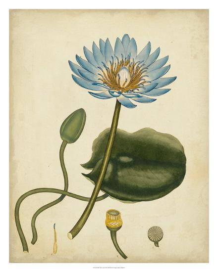 Blue Water Lily-Henry Andrews-Giclee Print
