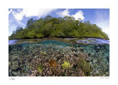 Blue Water Mangroves-Burt and Maurine Jones-Shimlock-Limited Edition
