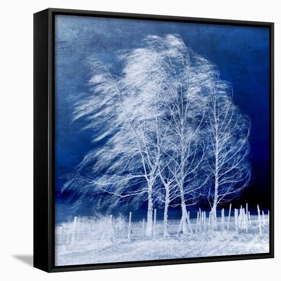 Blue Wind-Philippe Sainte-Laudy-Framed Canvas Print