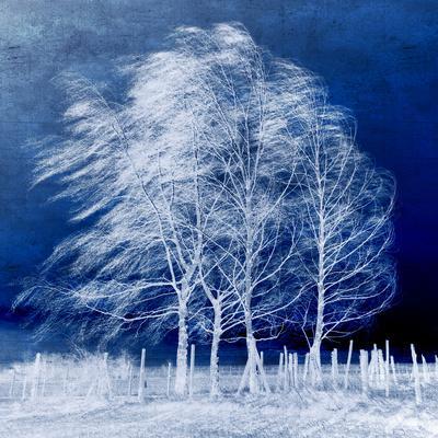 https://imgc.artprintimages.com/img/print/blue-wind_u-l-pheu2q0.jpg?p=0
