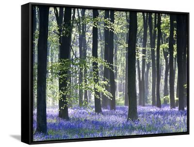 Bluebell Vision-Doug Chinnery-Framed Canvas Print