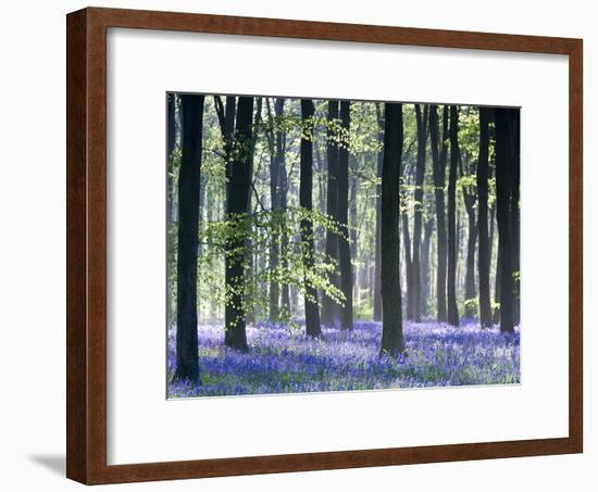 Bluebell Vision-Doug Chinnery-Framed Photographic Print