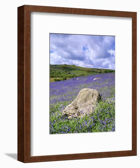 Bluebells in Open Pasture, Halwell Lawn, Devon, UK-David Clapp-Framed Photographic Print