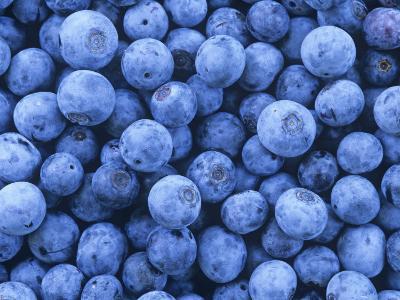 Blueberries, Vaccinium Corymbosum-David Sieren-Photographic Print