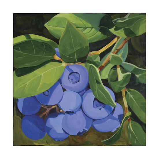 Blueberries-Catherine Breer-Giclee Print