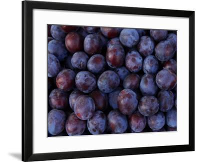 Blueberries--Framed Photographic Print