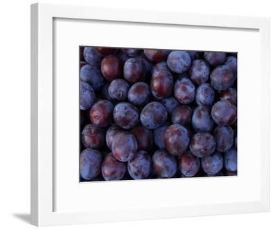 Blueberries--Framed Photographic Print