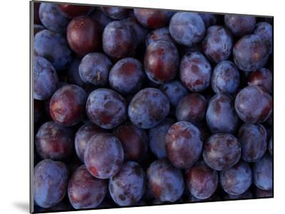 Blueberries--Mounted Photographic Print