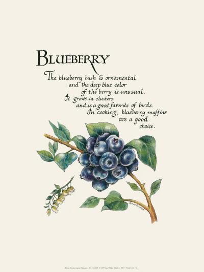 Blueberry-G^ Phillips-Art Print