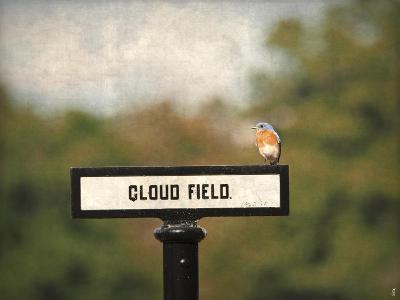 Bluebird at Cloud Field-Jai Johnson-Giclee Print