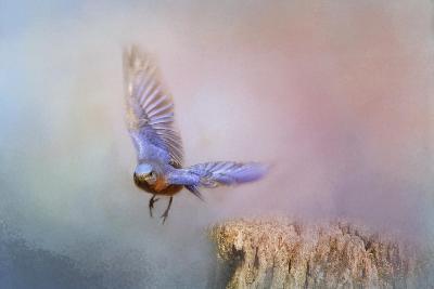 Bluebird Escape-Jai Johnson-Giclee Print