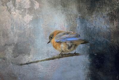 Bluebird in Winter-Jai Johnson-Giclee Print