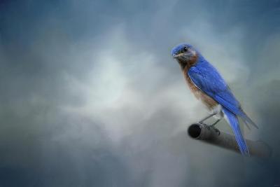 Bluebird on Patrol-Jai Johnson-Giclee Print