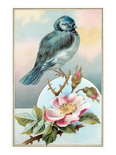 Bluebird on Rose Bush--Art Print