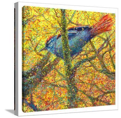 Bluebird-Iris Scott-Gallery Wrapped Canvas