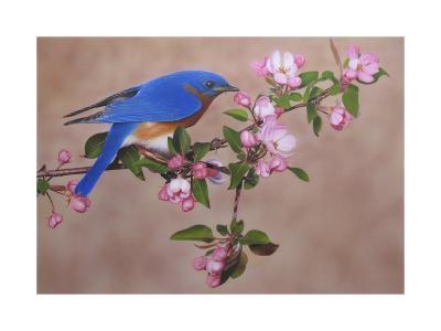 Bluebird-Clarence Stewart-Giclee Print