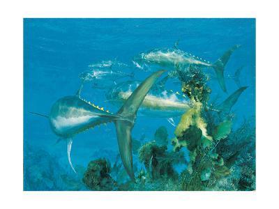 Bluefin Tuna, 'Right Turn at Cay Sal,' 1975-Stanley Meltzoff-Giclee Print