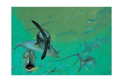 Bluefish in Tangle under the Head Boats, Rhode Island,' 1974-Stanley Meltzoff-Giclee Print