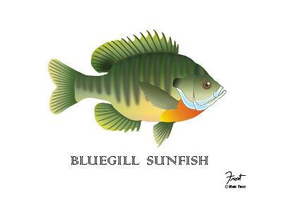 Bluegill Sunfish-Mark Frost-Giclee Print