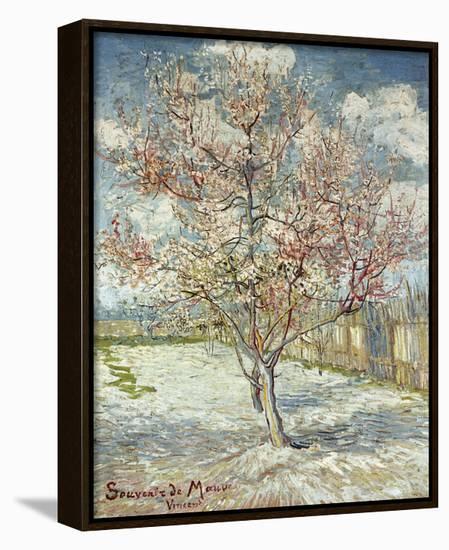 Bluehende Pfirsichbaeume (Souvenir De Mauve), 1888-Vincent van Gogh-Framed Canvas Print