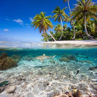 Tropical Island under and Above Water by Blueorangestudio