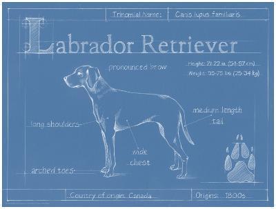 Blueprint Labrador Retriever-Ethan Harper-Art Print