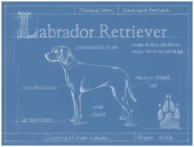 https://imgc.artprintimages.com/img/print/blueprint-labrador-retriever_u-l-f8hse80.jpg?p=0
