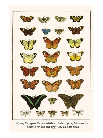 Blues, Calypso Caper Whites, Plain Tigers, Monarchs, Mimic or Danaid Eggflies, Caddis Flies-Albertus Seba-Art Print