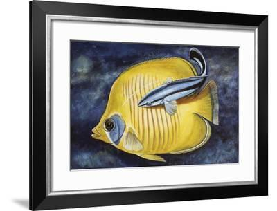 Bluestreak Cleaner Wrasse (Labroides Dimidiatus), Labridae--Framed Giclee Print