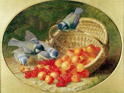 Bluetits Pecking at Cherries, 1897-Eloise Harriet Stannard-Giclee Print
