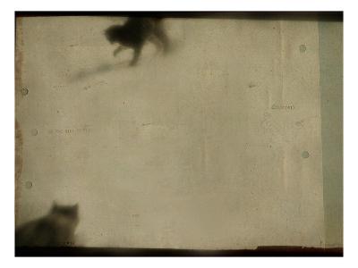 Blurred Cats-Mia Friedrich-Photographic Print