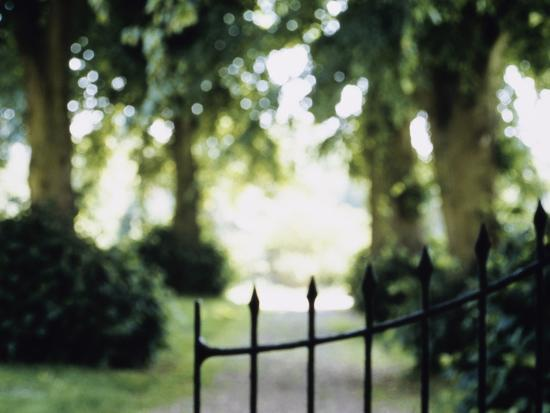 Blurred Image of a Gate and Woodland Path--Photographic Print