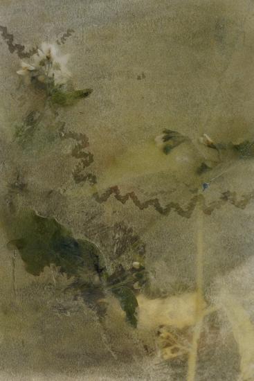 Blurred Image Of Flowers-Fay Godwin-Giclee Print