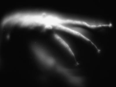 Blurred Sea Slug-Henry Horenstein-Photographic Print