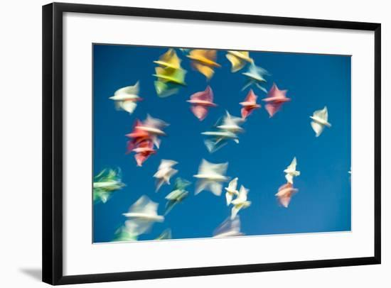Blurred Streaks of Color and Motion from a Flock of Colored Pigeons-Jonathan Kingston-Framed Photographic Print