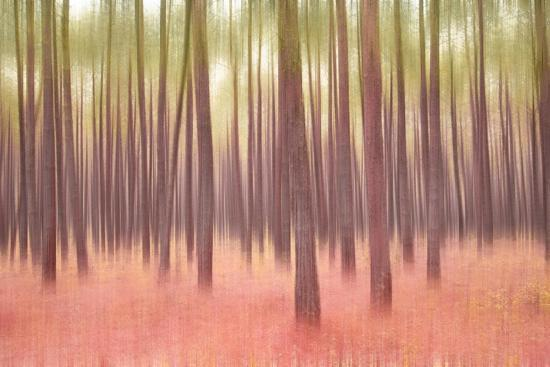 Blurred Trees 5-Moises Levy-Giclee Print