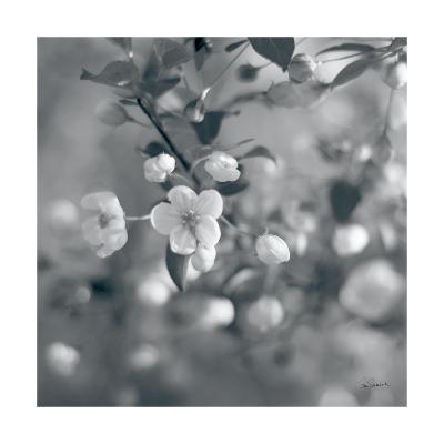 Blush Blossoms I Square BW-Sue Schlabach-Art Print