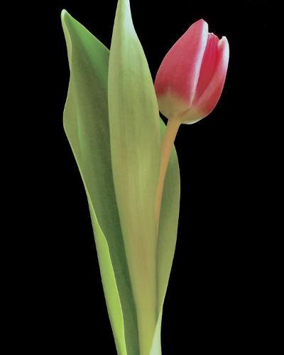Blush of Spring I-Monika Burkhart-Photo
