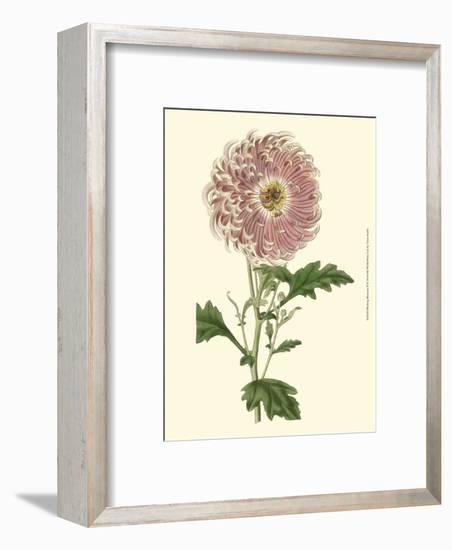 Blushing Blossoms II--Framed Art Print
