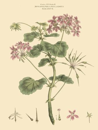 https://imgc.artprintimages.com/img/print/blushing-pink-florals-iv_u-l-pfr87n0.jpg?p=0