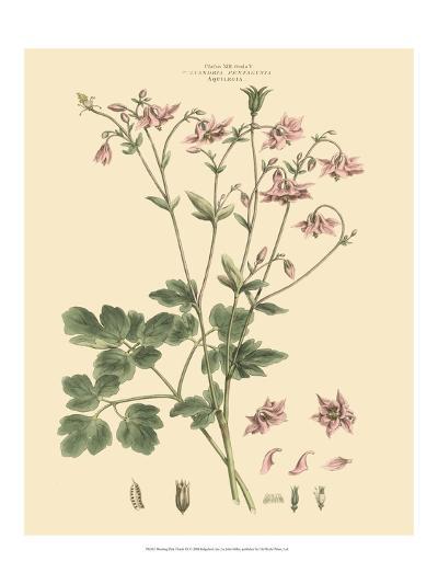 Blushing Pink Florals IX-John Miller (Johann Sebastien Mueller)-Art Print