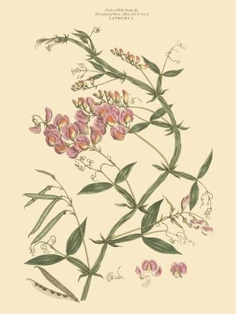 https://imgc.artprintimages.com/img/print/blushing-pink-florals-vi_u-l-pfr8930.jpg?p=0