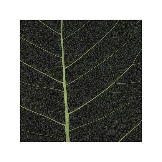 Bo Leaf I-Andrew Levine-Giclee Print