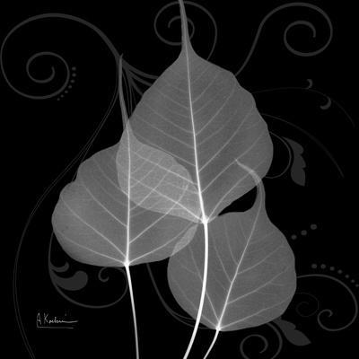 https://imgc.artprintimages.com/img/print/bo-tree-leaf-xray_u-l-pyjwbx0.jpg?p=0