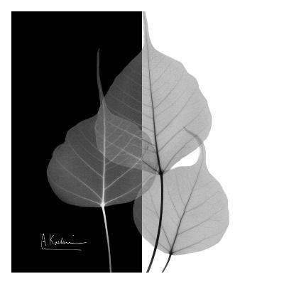 Bo Tree on Black and White-Albert Koetsier-Art Print